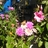 sue flores