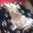 Zoë Hound Dog