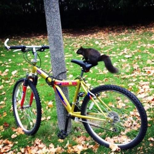 UMBlackSquirrel