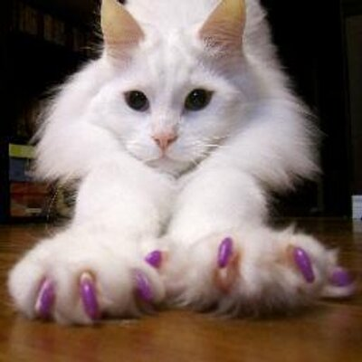 cats with short legs