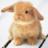 음모론 토끼