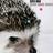 yusuke_koso