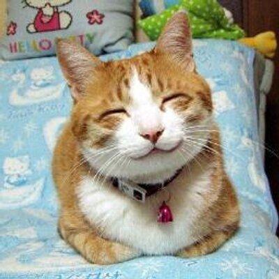 癒し系猫ネタ