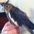 QueenieBird2ct's avatar