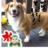 りあん☆ドッグマッサージセラピストのアイコン