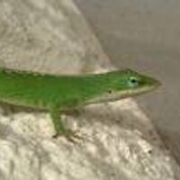 BillTheLizard | Social Profile