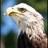 Freedom The Eagle