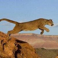 Online Puma
