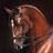 PP Equestrian