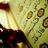 Quran Says Quotes (@quransaysquotes) Twitter profile photo