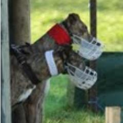 Clonmel coursing 2021 betting lines favorite social betting sites
