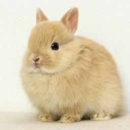 ちゅらうさぎ ちょこん うさぎ Rabbit かわいい ネザーランドドワーフ おしり ちゅらうさぎ Http T Co Y9kkmxenei Http T Co Kiq0kojowm