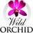 WILD ORCHID AUSTRALIA