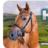 HorseandCountrySales