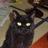 新黒猫館当主 (@bmwr65)