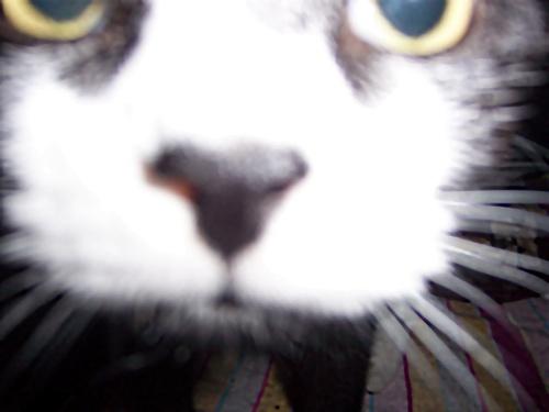 Blazing CatFur