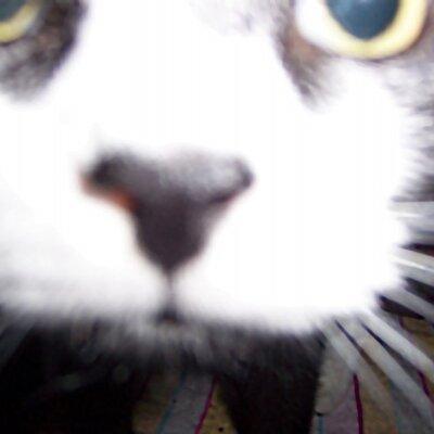 Blazing CatFur on Twitter