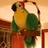 Joan Patterson - Piratebird11