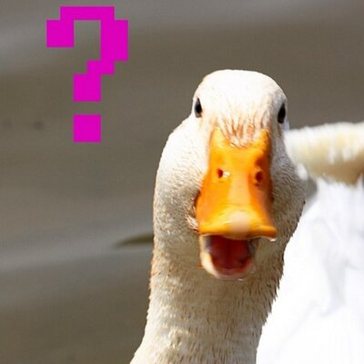 Image result for duck confused