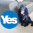 Dogs for Indy