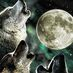 Wolf Moon Backs HCQ b/c Loves The Taste of Quinine Profile picture