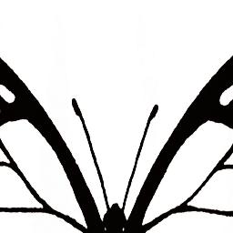 画像をダウンロード 蜘蛛 フリー素材 Cokaikon