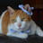 @togishigeko Profile picture