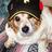 kaos dog- Bill Lewin