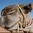 LaCamellaFeliz's avatar'