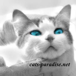@catsparadiseX