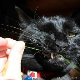 Jackass Cat Jackass Cat Twitter