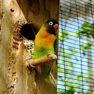 Lovebird Bandung On Twitter 4 Extra Fooding Biji Bunga