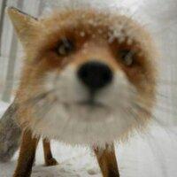 Fox Puppy @foxpuppy Profile Image