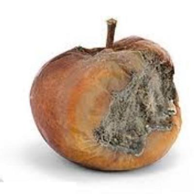 rotten apple rotten apple twitter