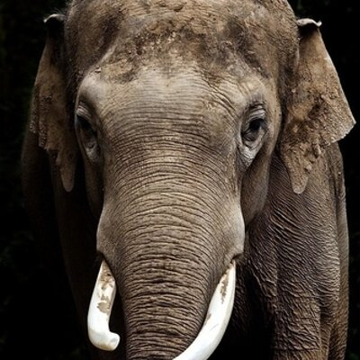 Packy the Elephant | Social Profile