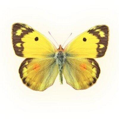 Fine Feather Press (@NatureActivity) Twitter profile photo