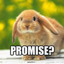 Follow Funny Bunny (@13monkies) Twitter
