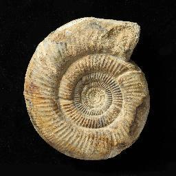 3dFossils