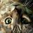 U_Akihir0's icon