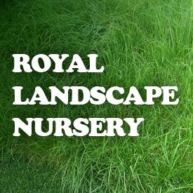 Royal Landscape Nrsy