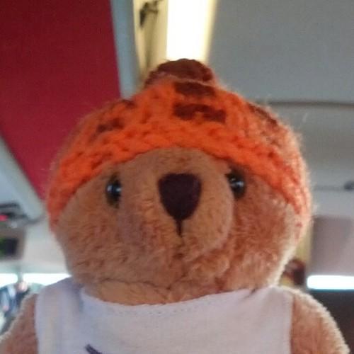 Terry The Teddy