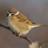 sparrow_bot1's avatar'