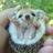 Mandy Copleston twitter profile