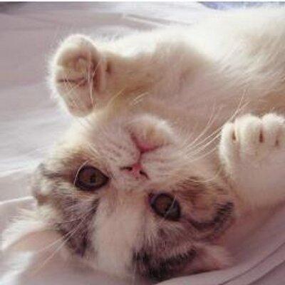 Amor Por Gatos At Amorporgatos Twitter