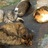 猫軍団のアイコン