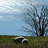Sheeps + Peeps Farm