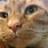 kitten_talker