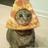 The PIZZACAT (the original pizza cat)