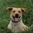 kevin cohen (@inmonopinion) Twitter profile photo