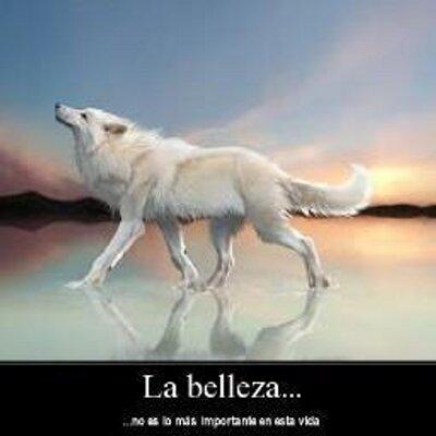 Lobo Solitario Manniuxx Twitter
